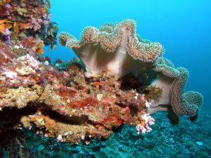 Maledivy potápění
