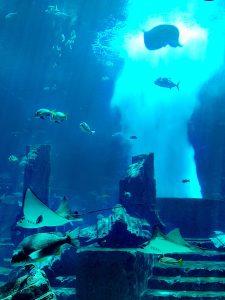 Dubaj, SAE, aquarium